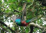 Monteverde Reserve Morning Walk -Monteverde Wild-