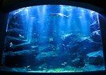 TOKYO SKYTREE® Admission & Sumida Aquarium Admission