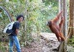 Ronie's Jungle trek Bukit Lawang