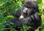 2 days Gorilla tracking Bwindi via Kigali
