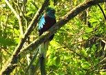 Birdwatching tour Atitlan