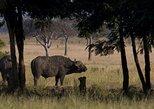 2 Day safari to Mikumi departure from Zanzibar