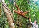 Marvellous Creature Orangutan : Sarawak Semenggoh Wildlife Centre Tour