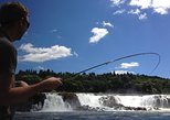 Fly Fish Near Willamette Falls for Worlds Largest Run of Shad