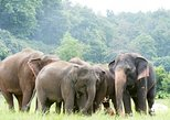 Chiang mai : Kanta Elephant Sanctuary (with transfer round trip )