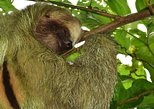 Sloth Tour in Arenal,La Fortuna|7 people Max