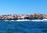 SEAL ISLAND CHARTER