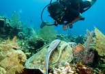 Cruise Excursion – 2 Scuba Dives with transport (for certified divers)