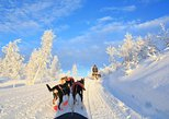 Dog sledding and winter experiences in historical surroundings