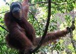 Full-Day FUN Jungle Trekking For School, Private