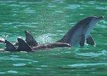 Dolphin, Kizimkazi Old Mosque and Red colobus Monkey Private Tour in Zanzibar.