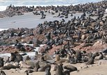 Cape Cross Seal Colony Tour from Swakopmund, Namibia
