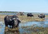 Africa & Mid East - Botswana: Chobe Day Trip
