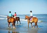 Puntarenas Beach & Rainforest Horseback Riding & Crocodile Tour Shore Excursion