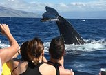 1.5 Hour Discount Whale Watch Tour
