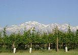 Vinos y Sabores de Maipú, Mendoza, ARGENTINA