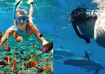 Mixed Dolphin Swim & Captain Cook Snorkel Trip