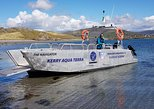 Valentia Harbour Sea Safari - 1hr Guided Tour