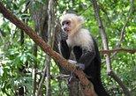 Daniel Johnson's Monkey & Sloth Hangout + Island Tour