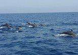 Dolphin Watching & Coastline Trip