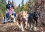 Summer Dog Sledding Cart Ride