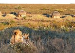 3-Day Luxury Gondwana Big 5 Safari & Whale Coast Small Group Tour from Cape Town