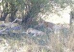 From Victoria Falls: Hwange National Park Day Safari