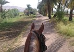 Horse Riding Tours of the West Bank of Luxor