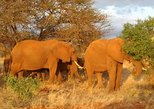 1 Day Amboseli Classic Safari Tour package,bruno safaris Kenya