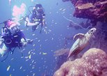 Scuba Diving and PADI Courses