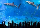 Langkawi Crocodile Farm and Underwater world Visit with Private Transfers