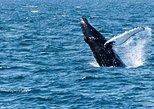 Whale watching - Reykjavík