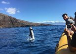 6 Hour Lanai Snorkel Dolphin Watch FULL DAY