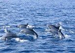 Nilavali whales & dolphin watching tour club