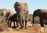 Addo Elephant Park & Kragga Kamma Wildlife Reserve combo Day Visit.