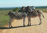 Addo Elephant Park Day visit