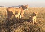 4 Days Exciting Camping Safaris Serengeti Tanzania