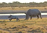 2 nights Rhino Safari in Central Botswana