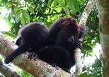 Belize Baboon Sanctuary
