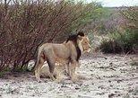 Africa & Mid East - Botswana: Half day Chobe game drive