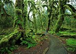 Explore Quinault Rain Forest -From Tacoma