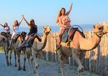 Self-guided Experience at the Camel Park in Sunny Beach