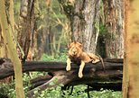 1-Day Lake Nakuru National Park Tour From Nairobi