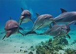 Dolphin House Snorkeling Sea Trip - Hurghada