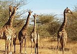 Half Day Tour :Bandia Animals Reserve