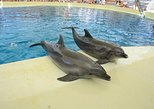 Antalya Dolphinpark with Hotel Transfers