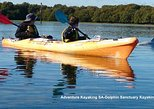 Dolphin Sanctuary and Ships Graveyard Kayak Tour