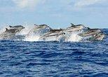 Dolphin Tour & Jozany Forest - Zanzibar