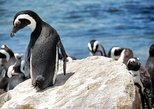 Cape of Good Hope Full Day Small Group Tour with Penguins View & Table Mountain