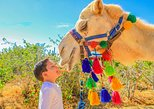 Mexico - Baja California Sur: Camel Outback Adventure and Eco-Farm from Los Cabos